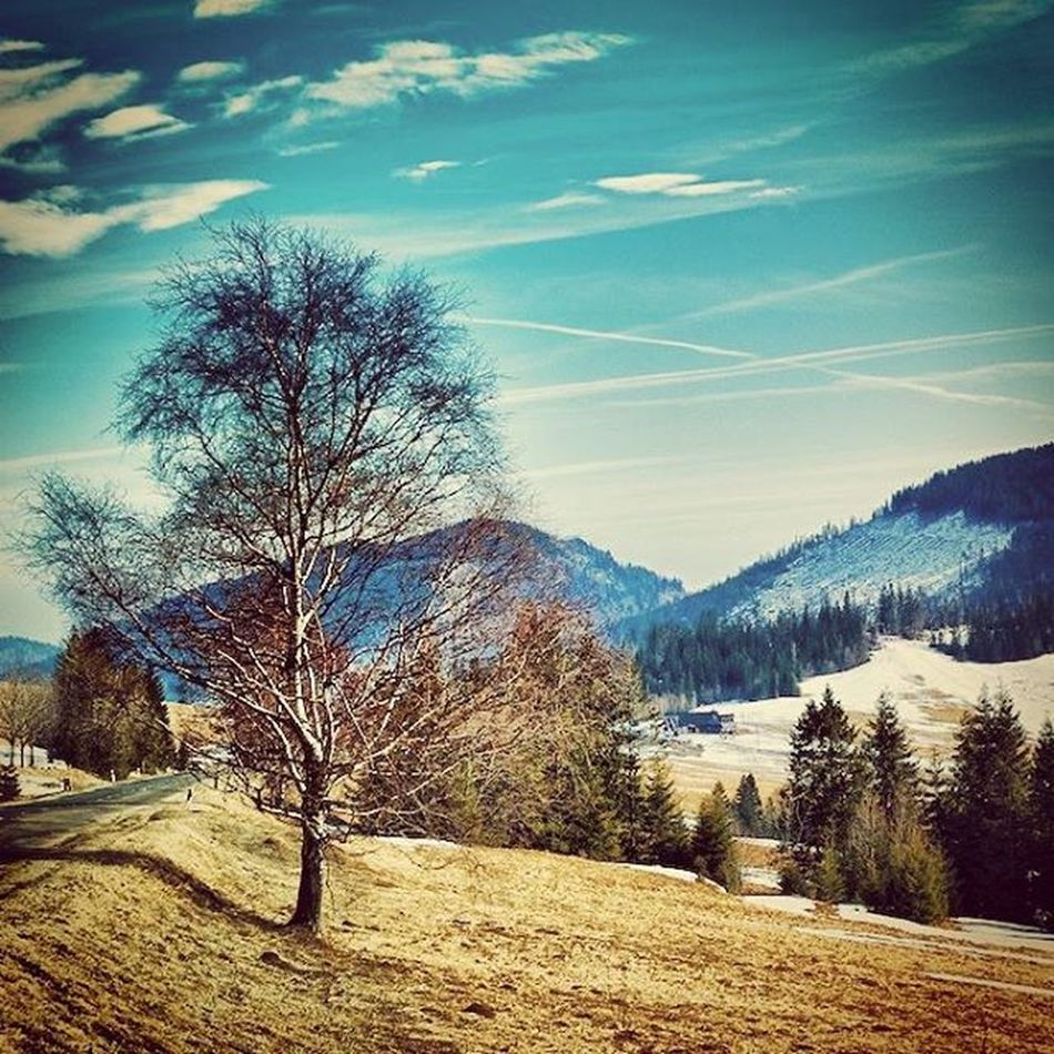 High Tatras Pureslovakia Thisisslovakia Explore_slovakia Insta_svk Zdiar Trees Loves_rural_trees Lory_alpha Landscape Sky Tree_magic