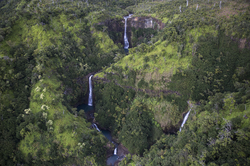 four watterfalls in jungle of wamea canyon Waimea Canyon Adventure Beauty In Nature Day Forest Freshness Jungle Lush Green Motion Mountain Napali Napali Coast Nature No People Outdoors Plant River Scenics Tranquil Scene Travel Destinations Tree View From Above Water Waterfall Waterfalls