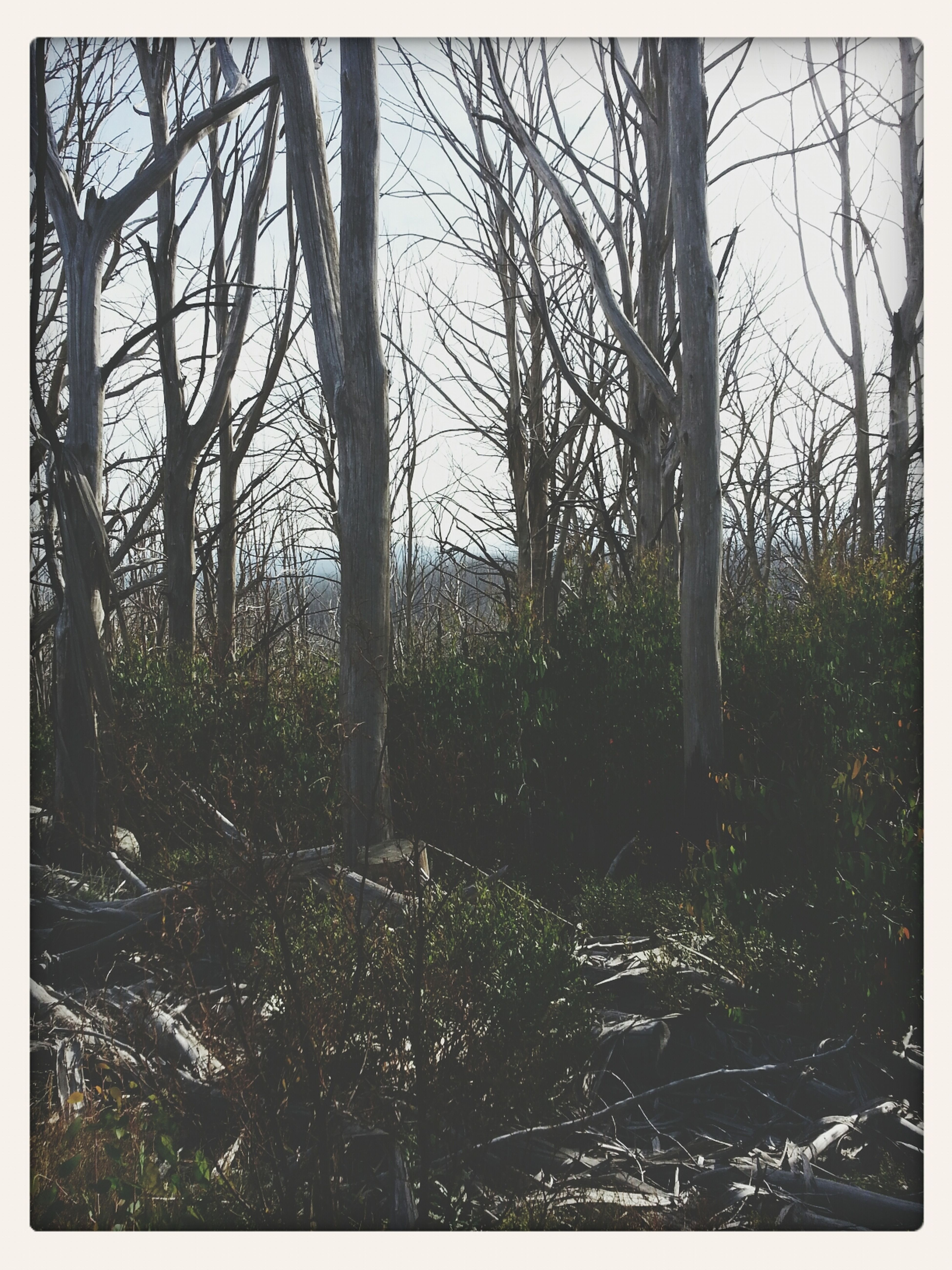 trees n stuff Landscape