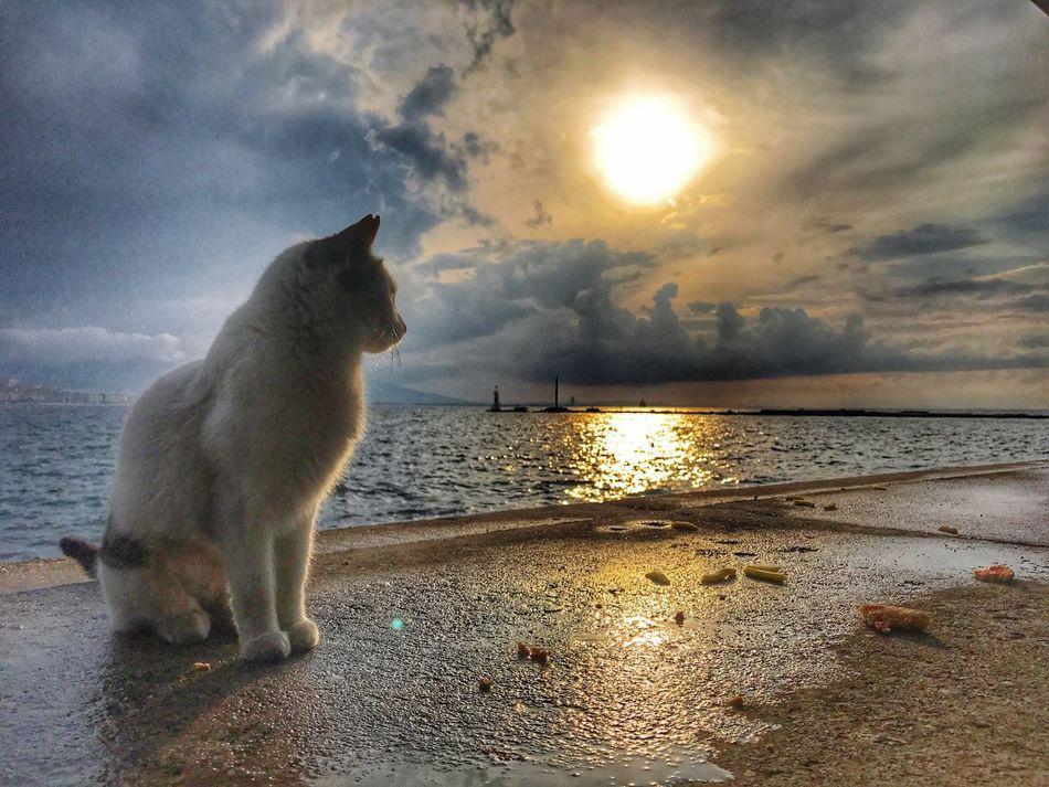 One Animal Cloud - Sky Mammal Domestic Animals Animal Themes Pets Water Nature Sea Sky Sunset Outdoors No People Beach Dog Cat Kedicik Gunbatimi Gununkaresi Deniz Kedi