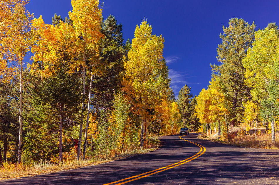 Aspen Trees Autumn Colorado Fall Beauty Fall Colors Golden Gate Canyon State Park Outdoors Road Scenics Season  September The Way Forward Tree Yellow