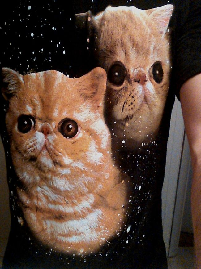 Cats guys. Cats. First Eyeem Photo