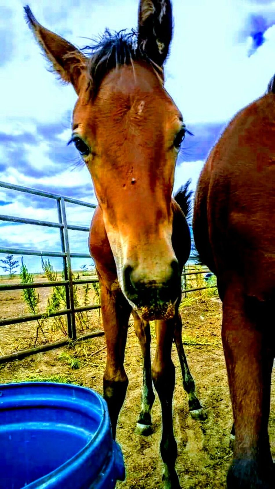 Ranch horses Animal Themes Domestic Animals Horse Mammal Livestock Animal Head  Sky Outdoors Field Standing No People Day Grass Close-up Nature Paddock Stable Working Animal Barn Filly Pasture, Paddock, Grassland, Pastureland Silhouette Country Living Ranch Farm