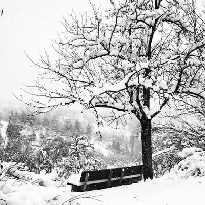 The #glorious deep #snow covered #winter #landspace of my #swabian homeland invite you to hike #ink361 #picoftheday #instahub #mobilephotography #tree #romantic #germany Instahub Ink361 Swabian Landspace Ink361_white Tree Winter Germany Snow Romantic Picoftheday Mobilephotography Glorious