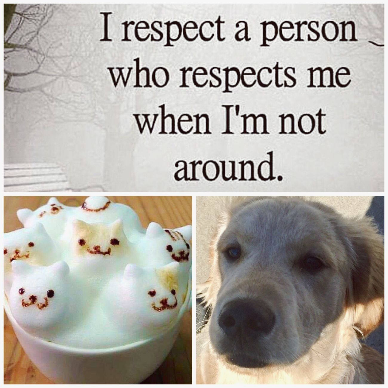 That's why I said before, sometimes it's better to hang out with your hound. Dog Quote Quotes♡ Text Mindful Collage Fancy Coffee Coffee - Drink Golden Retriever Goldenretriever Respect Gossip True Real People Trust Loyalty Friendship Bond Words To Live By