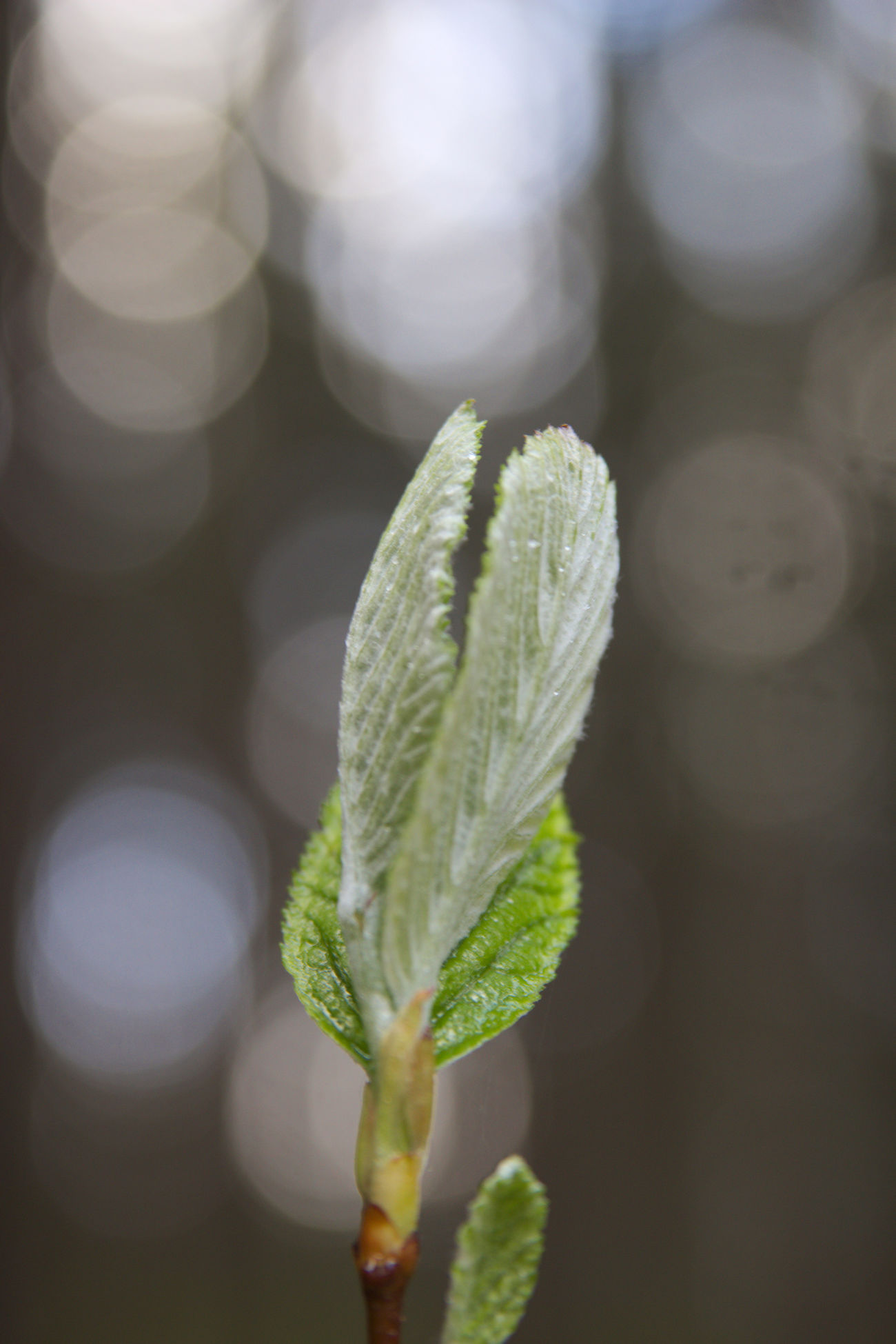 Beauty In Nature Close-up Day Eye4photography  EyeEm Nature Lover Focus Focus On Foreground Fragility Freshness Green Color Growth Leaf Light Morning Nature Nature Nature Photography Nature_collection Naturelovers New Life No People Outdoors Plant Sunlight
