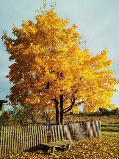 Tree Nature Outdoors Beauty In Nature Scenics Day Sky Growth Leaf Autumn No People Fall Blue