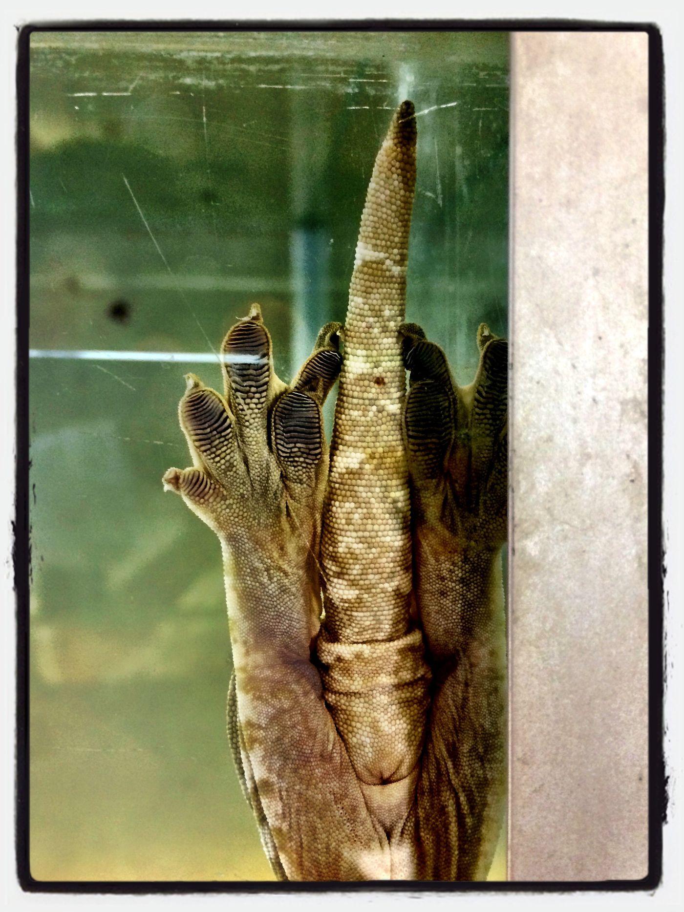 Gecko ;) Gecko Füsse Haftung Kleben