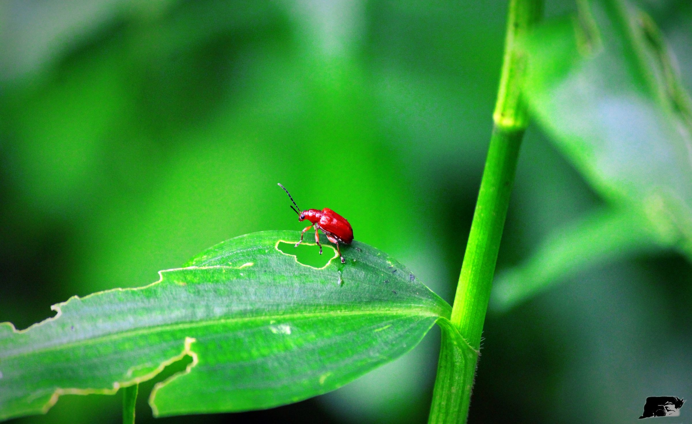 Nature Green Country Homeland Green Leaves Greenpeace Redhead Redfly Macro_bugs Macro Insects Macro Photography