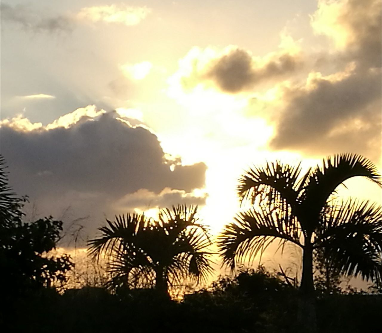 Palm Tree Silhouette Early Evening Golden Sky