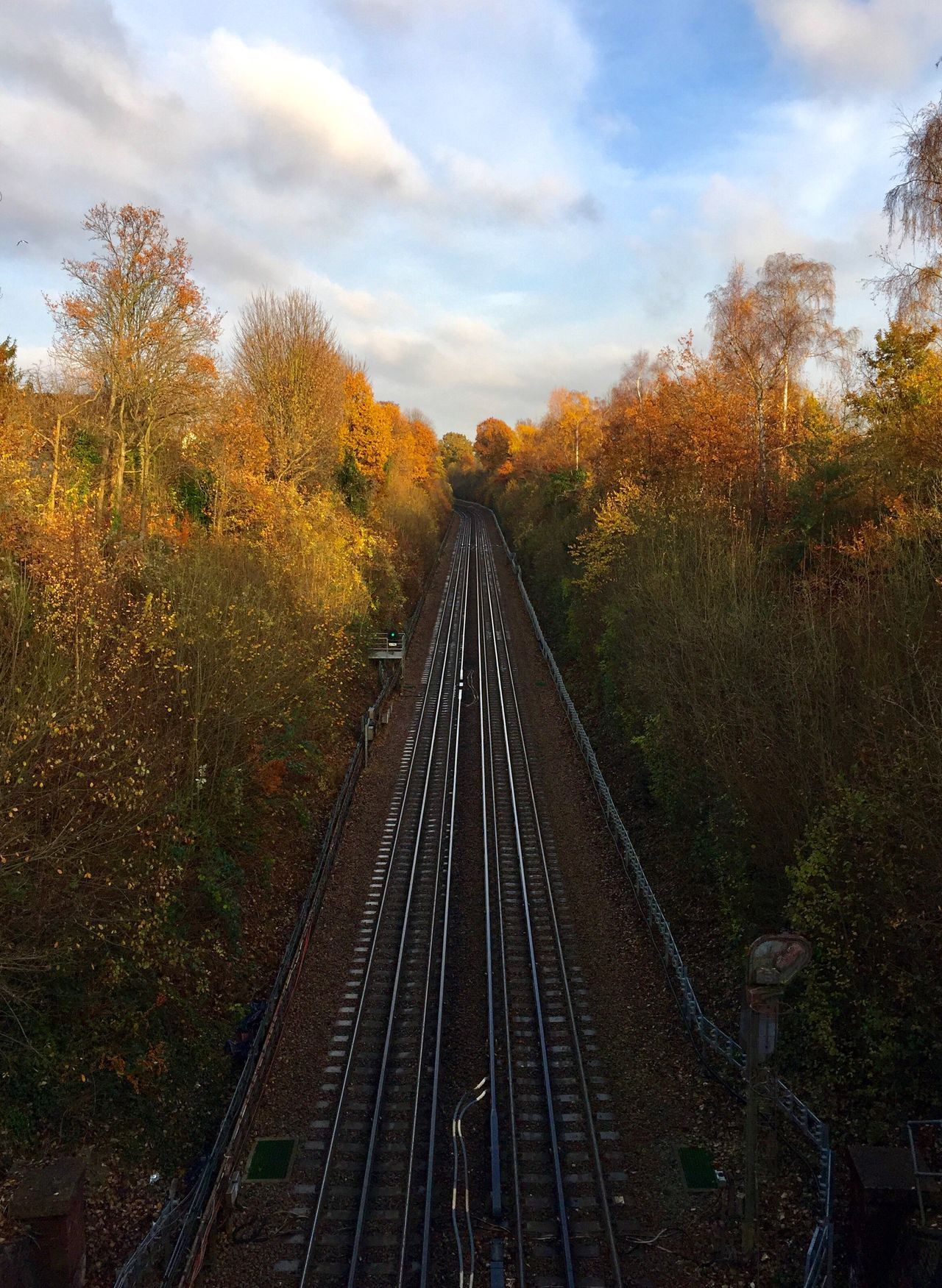 Tree Railroad Track Autumn Rail Transportation Change Nature Transportation Sky No People Beauty In Nature Forest Tree Trees Outdoors Day Scenics Growth Cloud - Sky Treetop