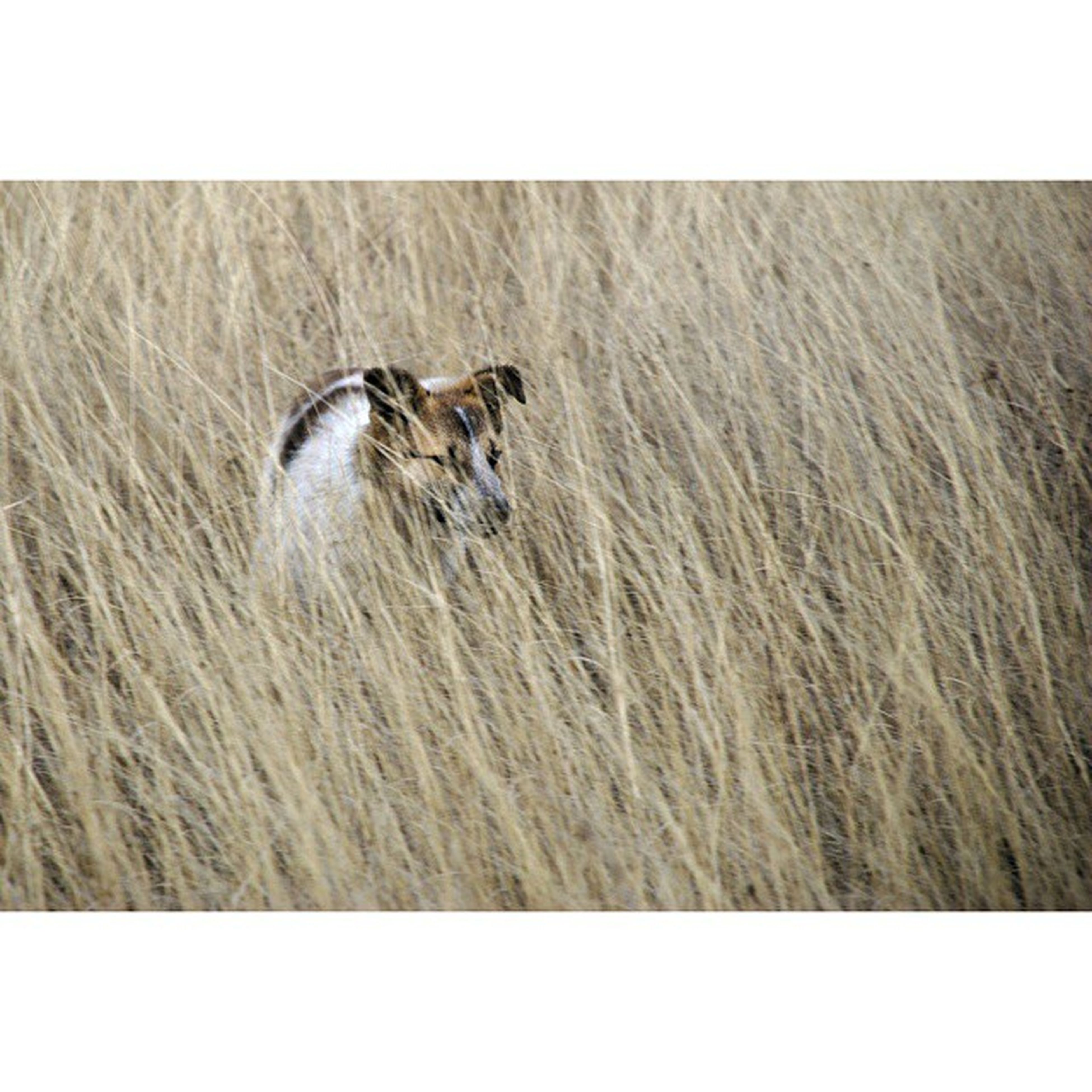 animal themes, transfer print, one animal, auto post production filter, wildlife, animals in the wild, mammal, domestic animals, field, grass, zoology, side view, bird, nature, pets, outdoors, full length, no people, day, animal