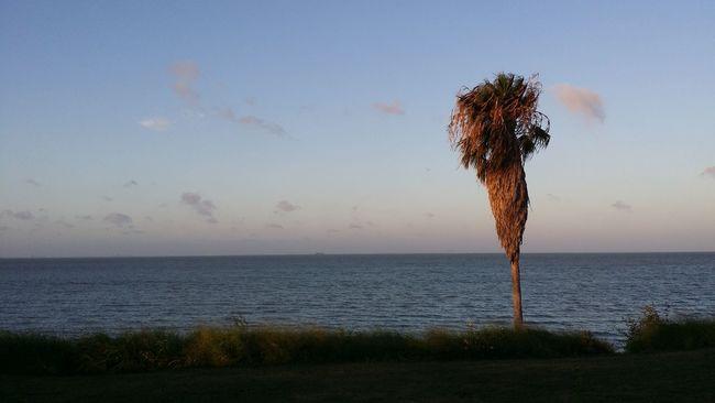 Corpus Christi, Tx Texas Ocean View Palm Tree Travel Photography