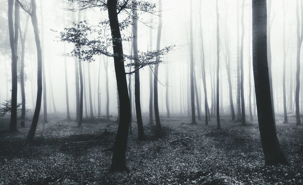 Dark forest Forest Tree Nature Fog Spooky Tree Trunk Outdoors Foggy Mist Scenics Backgrounds Germany Nebel Misty Fairytale  Trees
