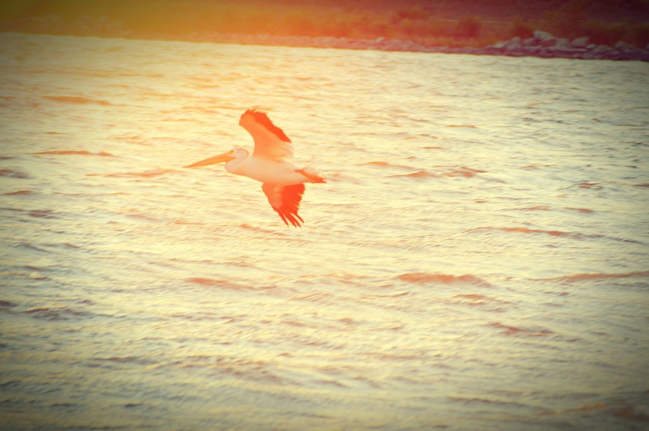 Best Of EyeEm Eyeem Market EyeEm Best Shots - Landscape Fine Art Pelicans In Flight EyeEm Gallery Golden Reflection Sunset_collection Beautiful Best Photos Online Landscapes Nature Golden Light Beautiful Sky Abstract Nature Best Landscape Photos Birds_collection Birds Of EyeEm  Sun Reflection On Water Best Photos For Sale Eyeem Photography Colorado Photography Sunset #sun #clouds #skylovers #sky #nature #beautifulinnature #naturalbeauty #photography #landscape I Love My Daughter's ❤❤ Amazing View