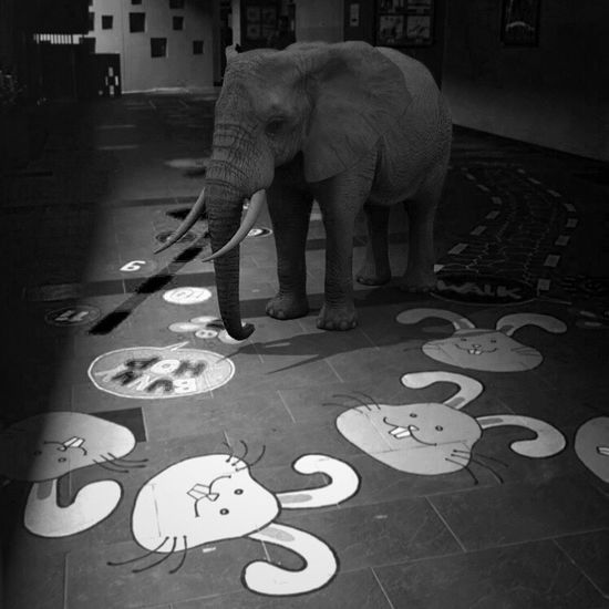 Playground Elephant Getty Images Gettyimages Blackandwhite IPhoneography No People