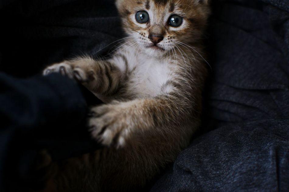 she's soooo Cat Domestic Animals Domestic Cat Just Photography Kiiten Mammal Pets Taking Photo Taking Photos
