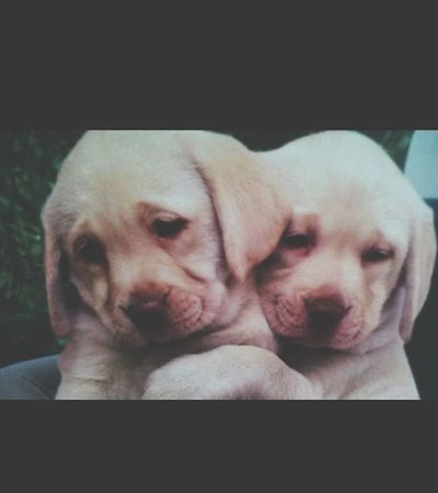 My Dogs Dogs SweetLe