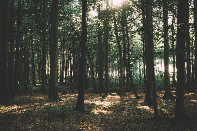 Beautiful Light Beauty In Nature Forest Forest Photography Forestwalk Landscape Landscape_Collection Landscape_photography Light Light And Shadow Nature Non-urban Scene Ostsee Outdoors Scenics Solitude Tranquil Scene Tranquility Tree WoodLand