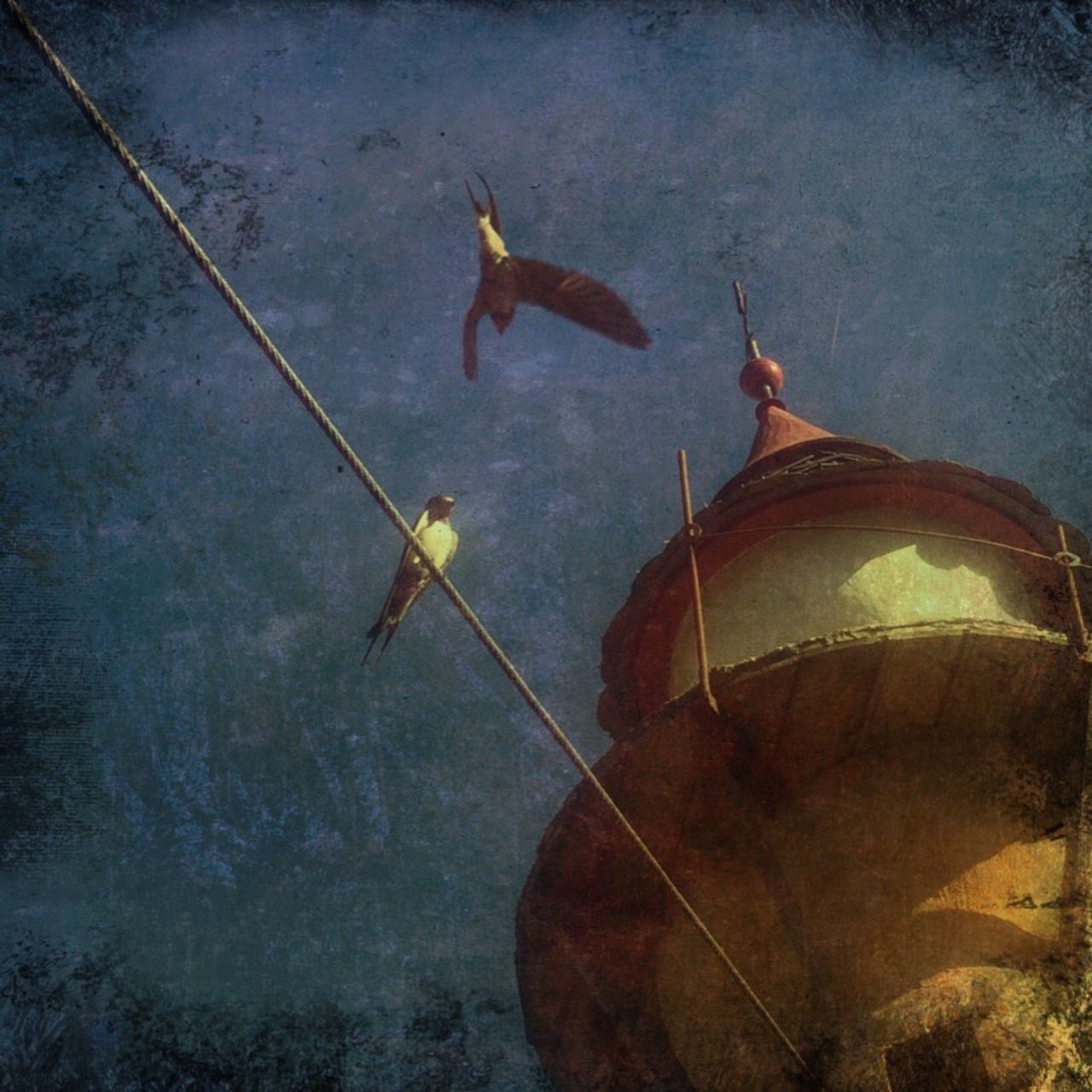 Sparrows Birds Sky Wire Painterly