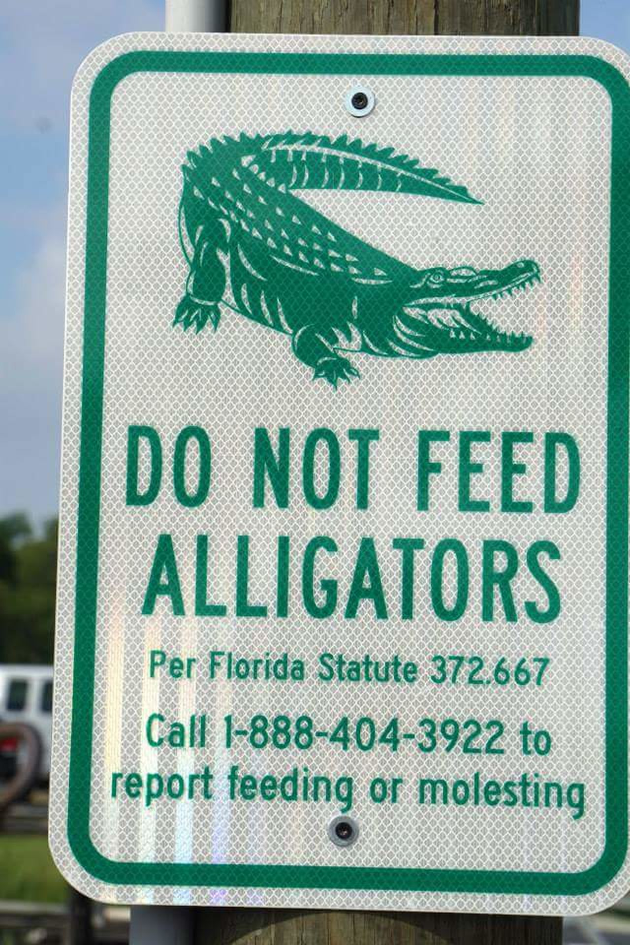 Do not feed the alligators Do Not Feed The Alligators Its The Law Florida Life Dangerous