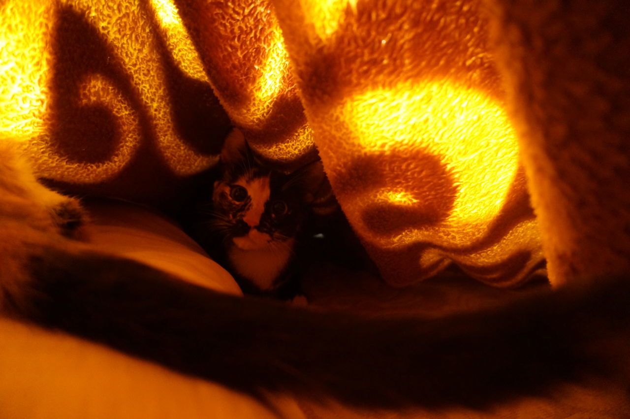 Hello 🐈 Cat Under Blanket Hello Kitty Hello World Orange Underneath Hiding Peekaboo Hide And Seek I See You Caught You Found You Cats Cat Lovers Cat Lover Beautiful Beauty Love Those Eyes Yellow Eyes Playful CLEOPATRA Pet Family