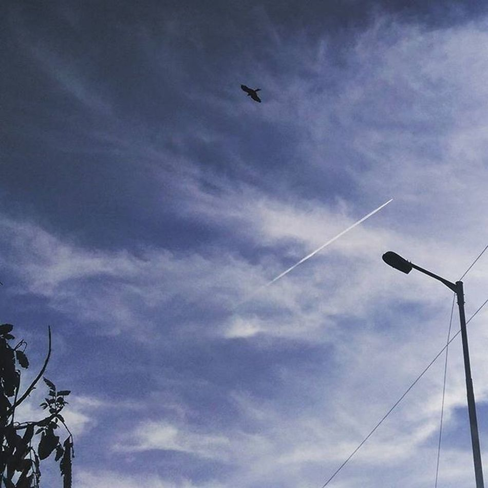 Two birds in the sky!! A good start to a New year :-D NewYear 2016 Happy Twobirds Bird Jet IAF IndianAirForce Airforce Fighter Tail Clouds Sky Bangalore SoBangalore Love Chill Indiapictures Photooftheday Photographersofindia Lamp Streets Beautiful India HTC phonephotography