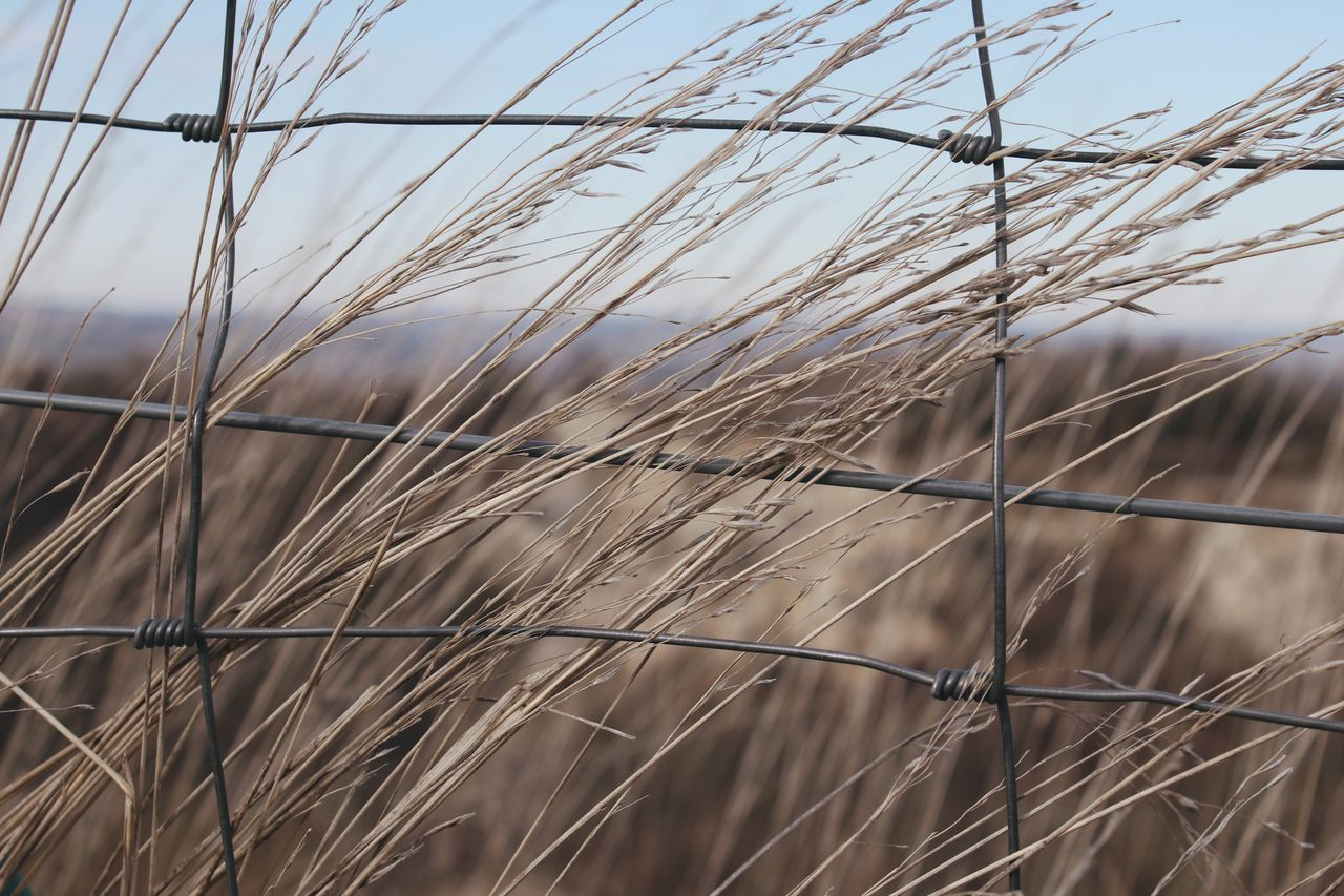 Outdoors No People Close-up Nature Sky Flowers Dryland Grassland Tundra Dry Yellow Grass Autumn Grass Steppe Fence Border Field Nature Beauty In Nature Landscape Plant No Mans Land