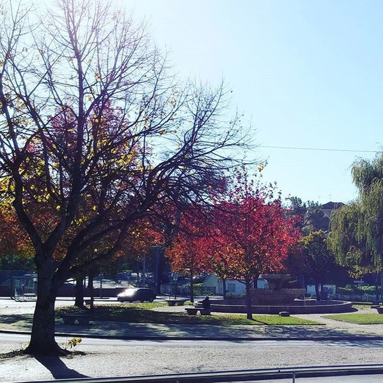 tree, autumn, nature, road, growth, change, outdoors, day, beauty in nature, street, tranquil scene, tranquility, scenics, branch, clear sky, transportation, no people, sky, sunlight, the way forward, park - man made space, travel destinations, leaf, bare tree