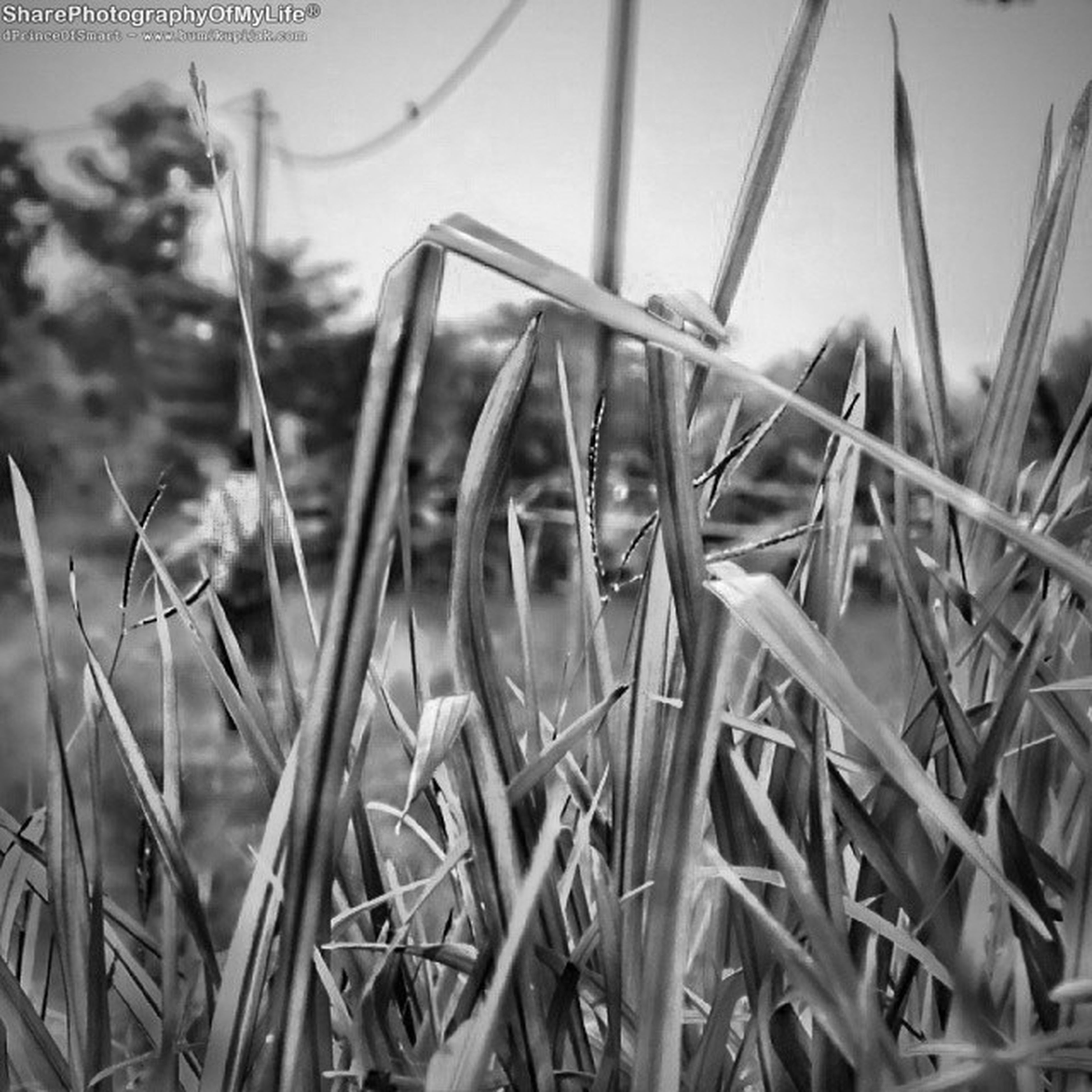 grass, animal themes, one animal, field, selective focus, plant, close-up, day, focus on foreground, outdoors, nature, grassy, wildlife, childhood, no people, portrait, looking at camera, animals in the wild, chainlink fence, high angle view