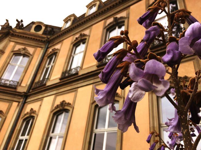 Castle Schloss Flower Purple Happy Colors Good Morning Good Weather Germany Stuttgart Pic The Architect - 2017 EyeEm Awards