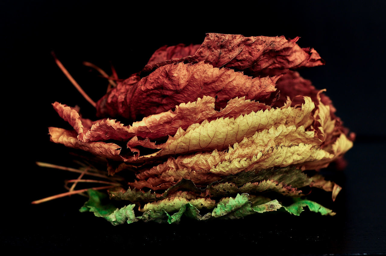 Close-Up Of Colorful Leaves Against Black Background