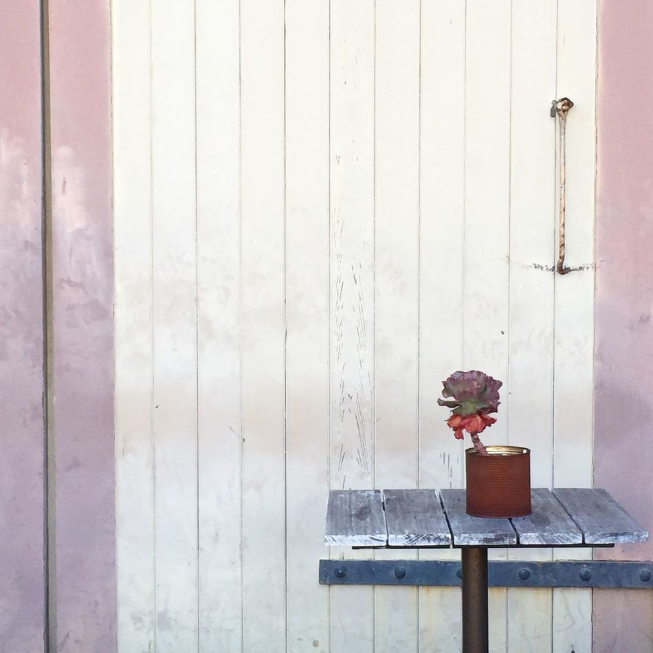 Location scouting for my next family photography session. Taking Photos Sydney Succulent Minimalism Pattern Hanging Out