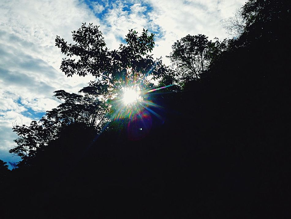 Sol y bosque 🌞🌲 Nature First Eyeem Photo