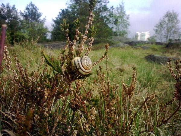 snail Close-up Dusk nature