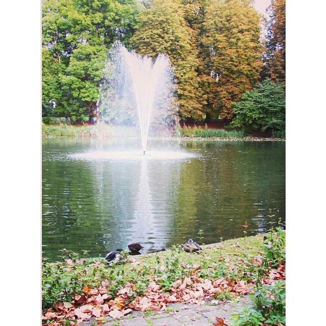 Germanianordoccidentale Schlossfallersleben Camminare Acqua anatrecoloristupendiautunnofoglie