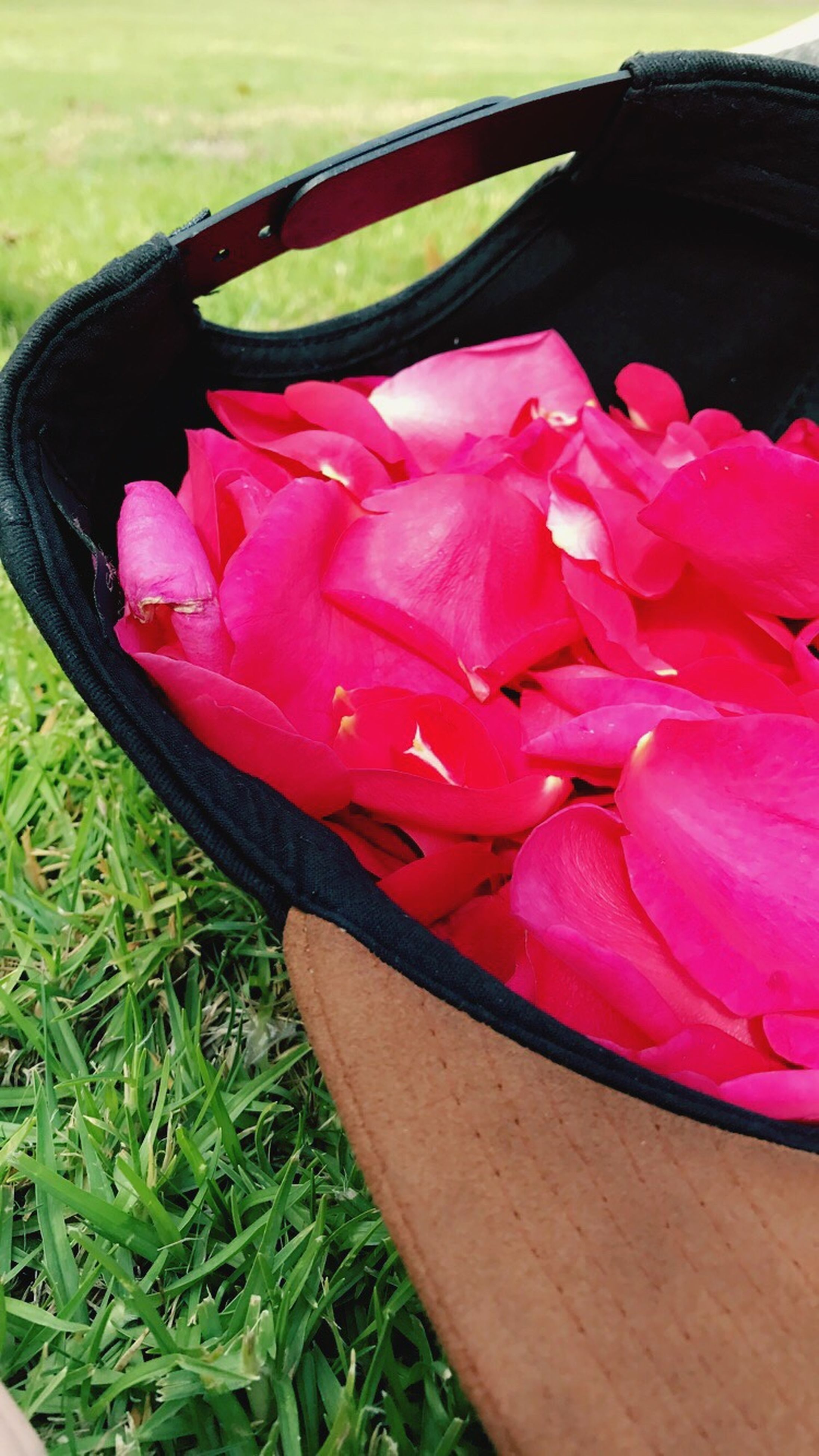 grass, petal, red, close-up, freshness, flower, outdoors, nature, day, no people