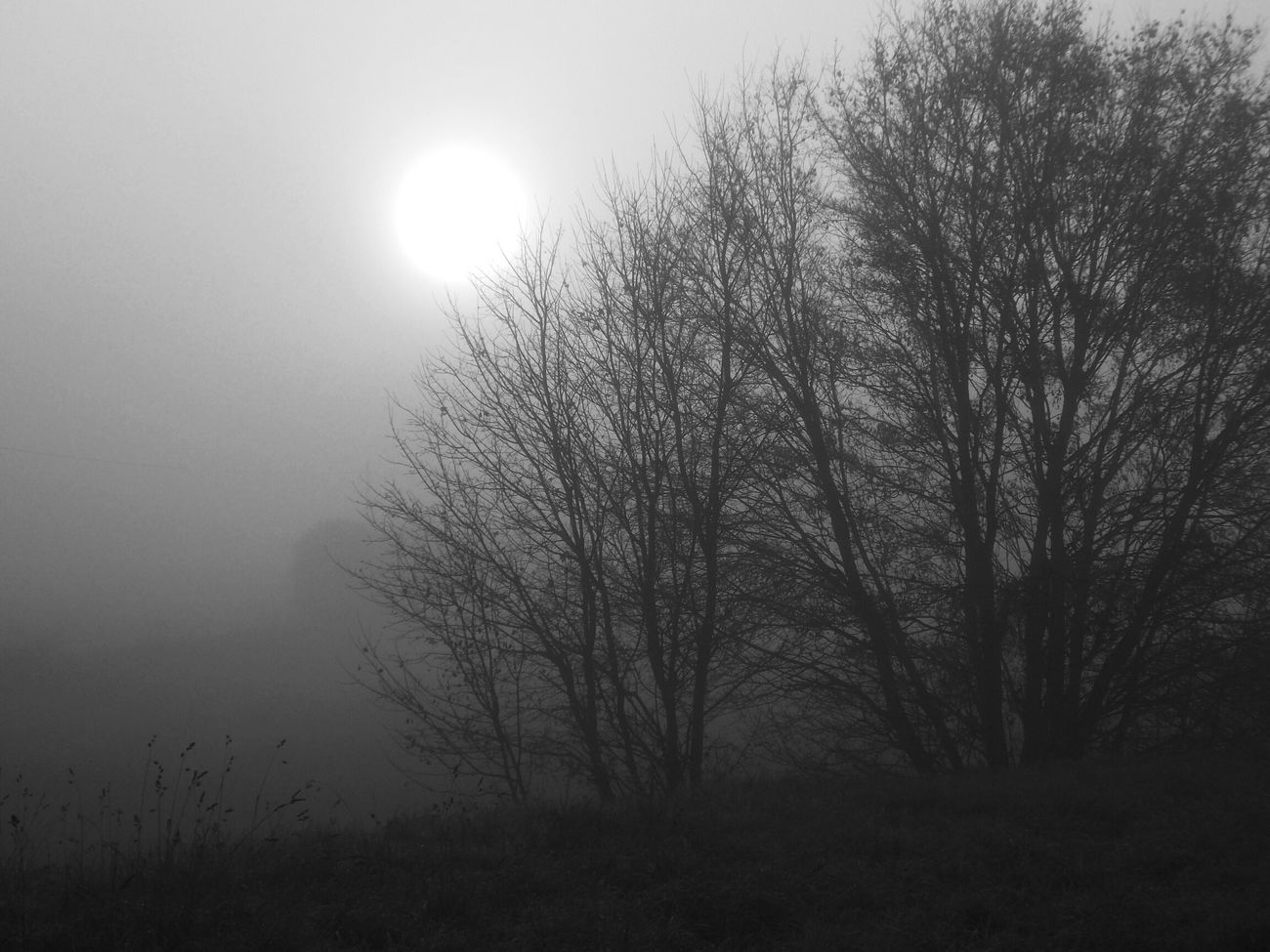 Fog in my head today Nature EyeEm Best Shots Monochrome Light And Shadow