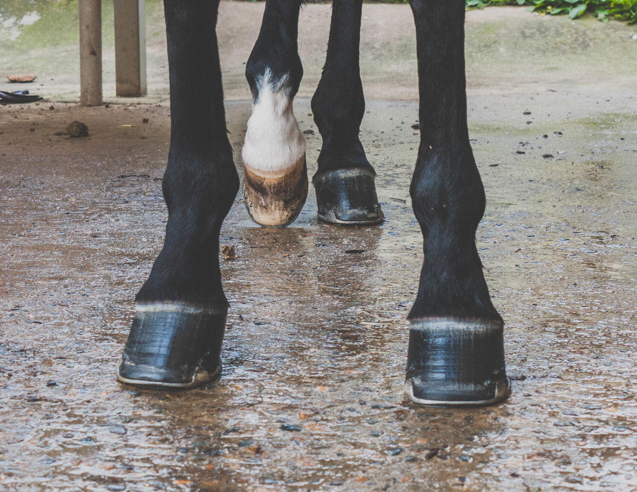 Four Legged friend A Feet Four Legged Friend Horse Horse Legs Legs Mammal Read