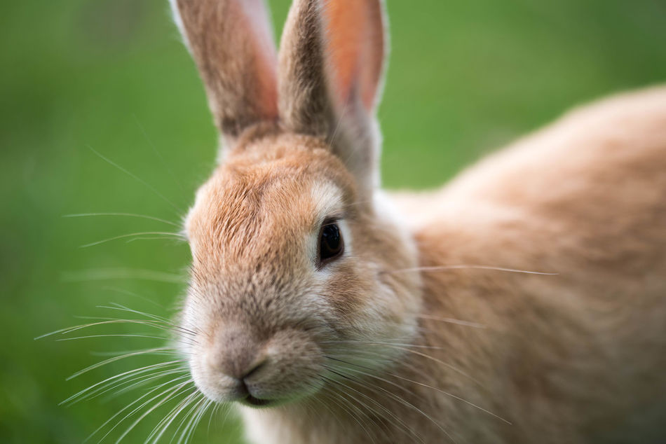 Beautiful stock photos of hasen, Animal Themes, Close-Up, Day, Domestic Animals