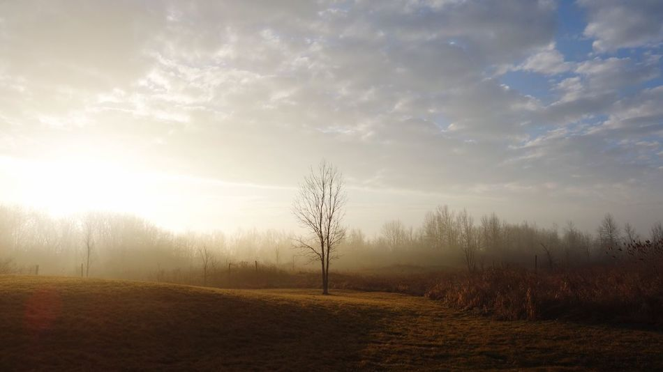 Sunrise ☀️ Tranquility Tranquil Scene Tree Landscape Beauty In Nature Sky Scenics No People Outdoors Field Day EyeEmNewHere Rx100 Beauty In Nature Sunrise Sun Nature