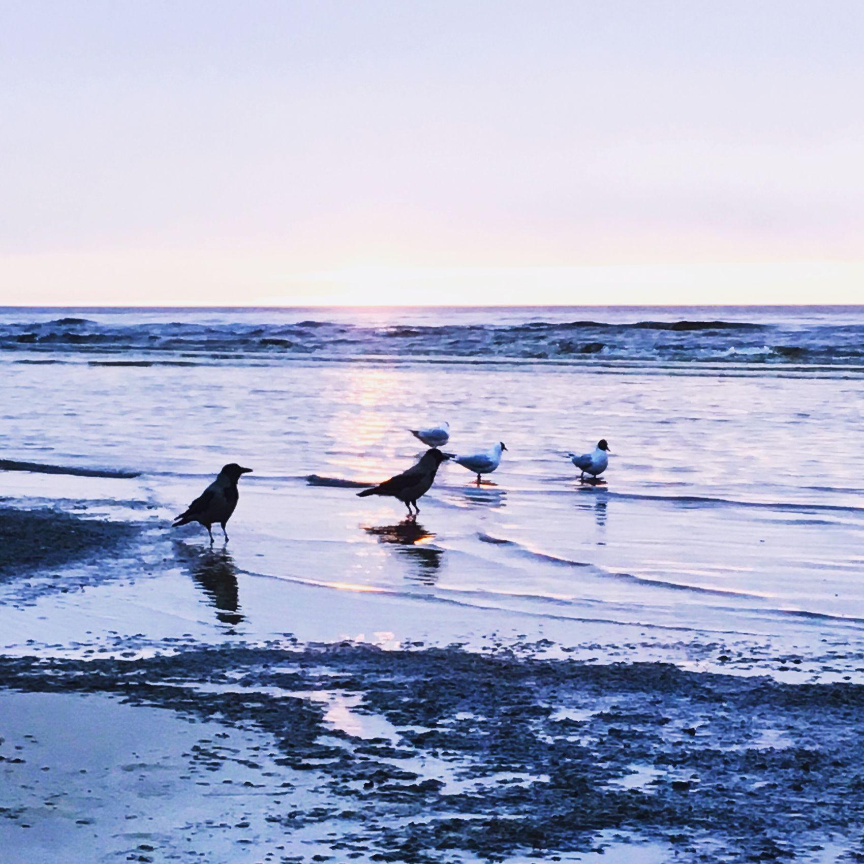 Latvia JurmalaBeach Sunset Sea Bird Water Nature Beauty In Nature Wave