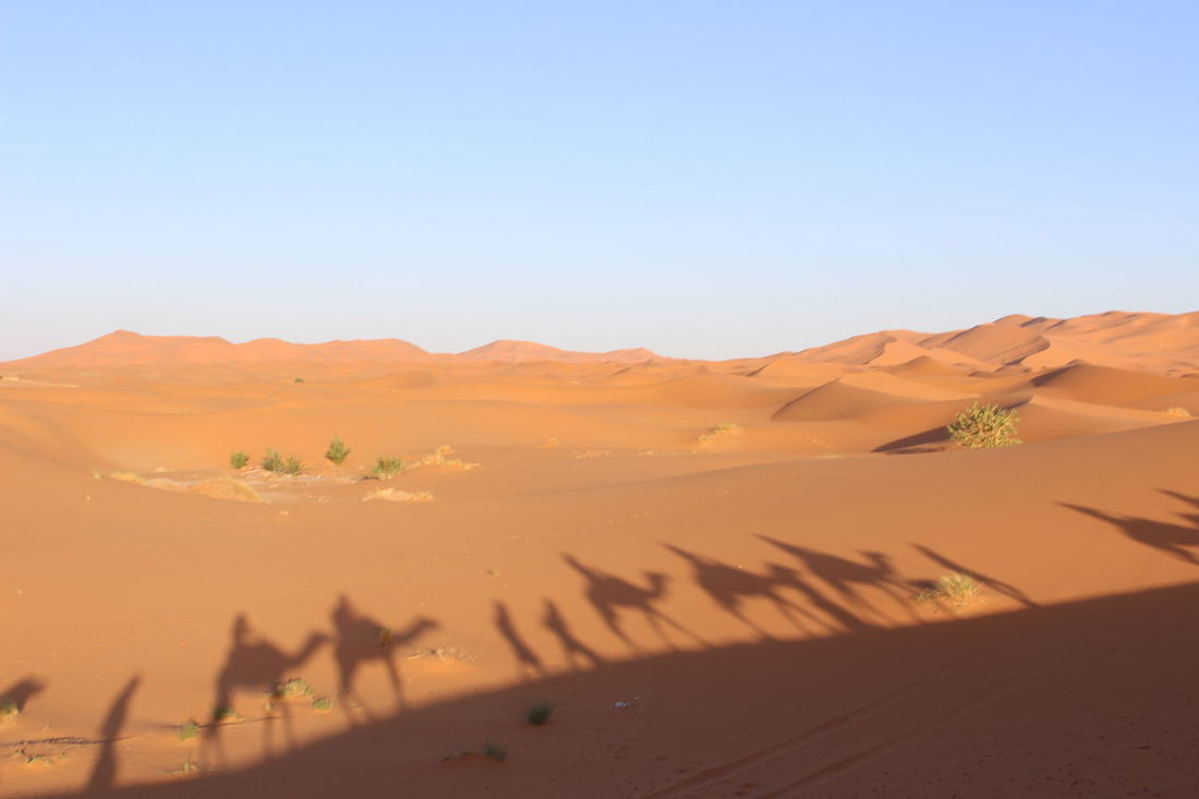 Arid Climate Beauty In Nature Clear Sky Day Desert Desert Dune Sand Landscape Marrakech Merzouga Merzouga Sahara Desert Trippin Nature Nature No People Outdoors Remote Sand Sand Dune Scenics Sky Tranquil Scene Tranquility