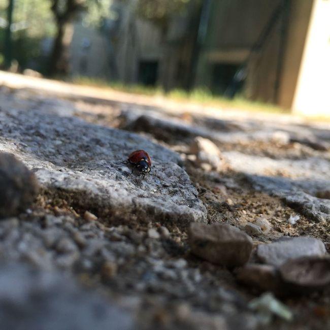 Ladybug France Stage Nature
