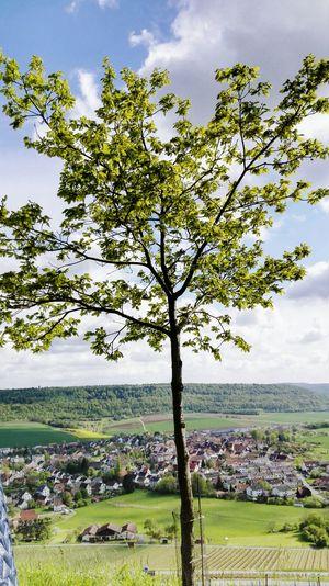 Schöne Aussicht! Landscape Landschaft Himmel Und Wolken Weinberge Dorf Felder Wiesen EyeEm Nature Lover Eye4photography  Baum Frisches Grün