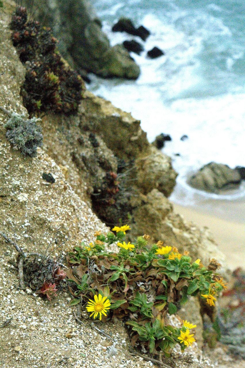 nature, rock - object, plant, flower, no people, day, growth, outdoors, close-up, sea, beauty in nature, fragility, water, freshness