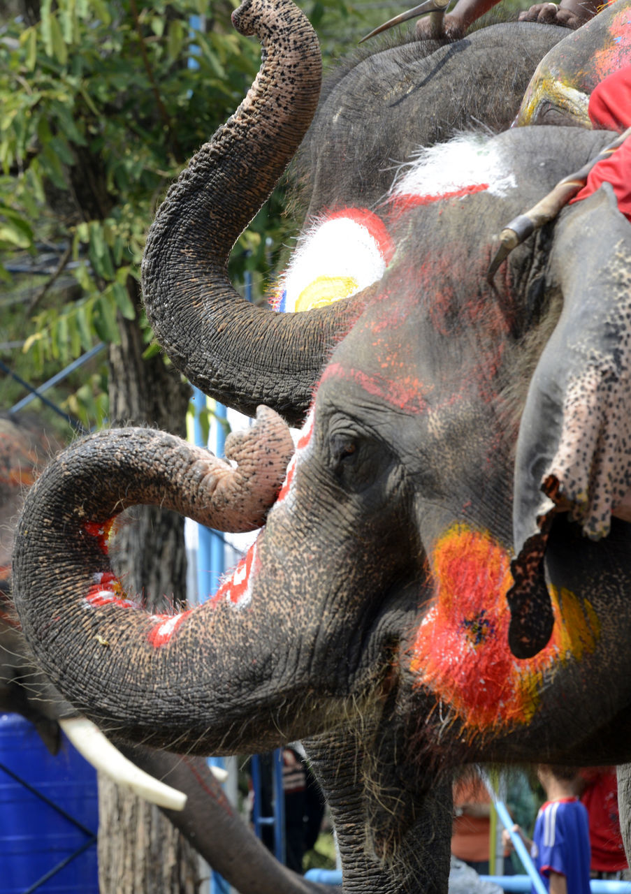 Close-Up Of Decorated Elephant