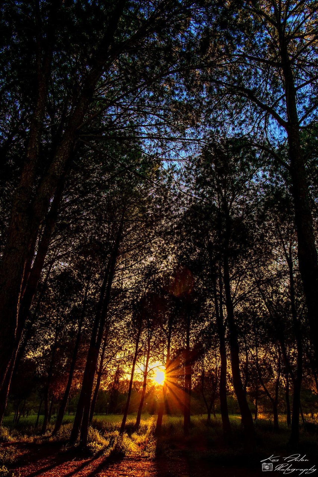 EyeEm Best Shots EyeEm Nature Lover Landscape Nature Nature_collection Sun Sunset Tree Trees