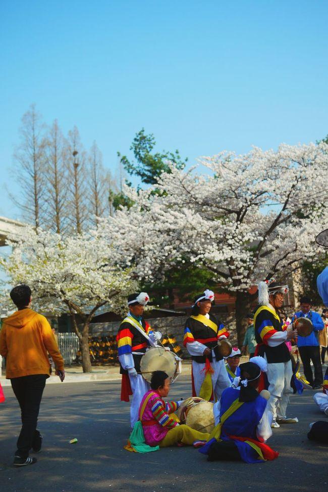 Flowers Festival Spring Samulnori Korean Music Street Performance Old People Colorful Sound Open Edit