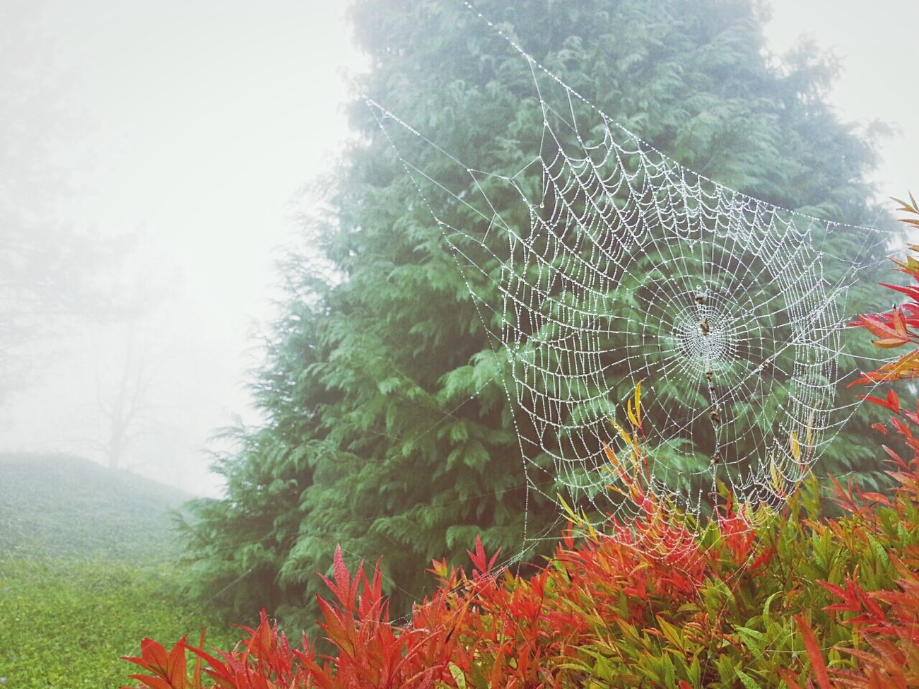 Cobweb Foggy Morning Fog